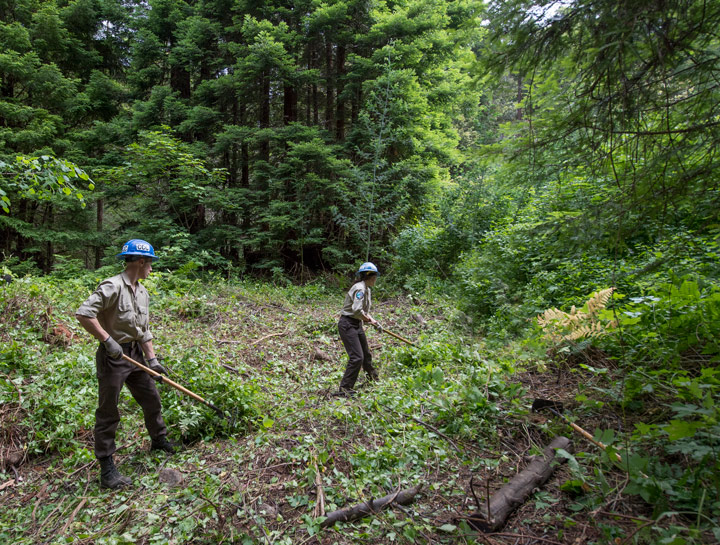 Conservation stewards with tools removing invasive plants.