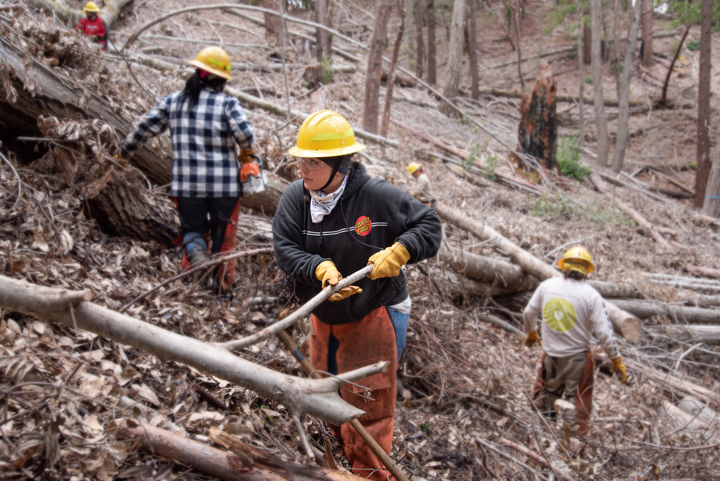 Stewardship crew moves wood in dense forest.
