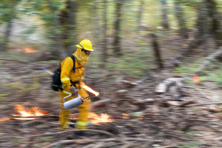 Fire fighter carrying a torch through the brush of San Vicente Redwoods.