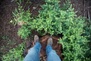 The view looking down at ones boots while standing on a redwood stump.